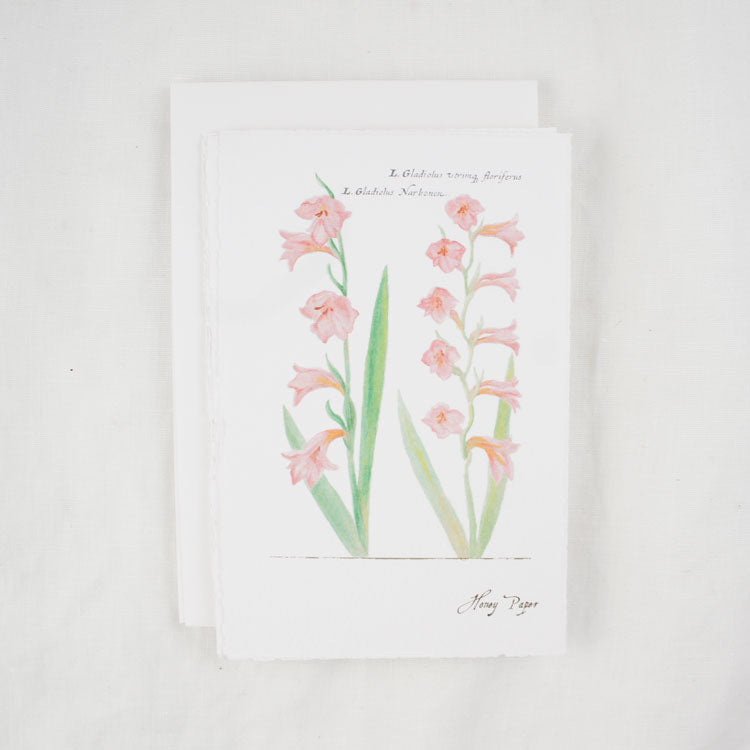 Gladiolus Greeting Cards and Notecard Sets
