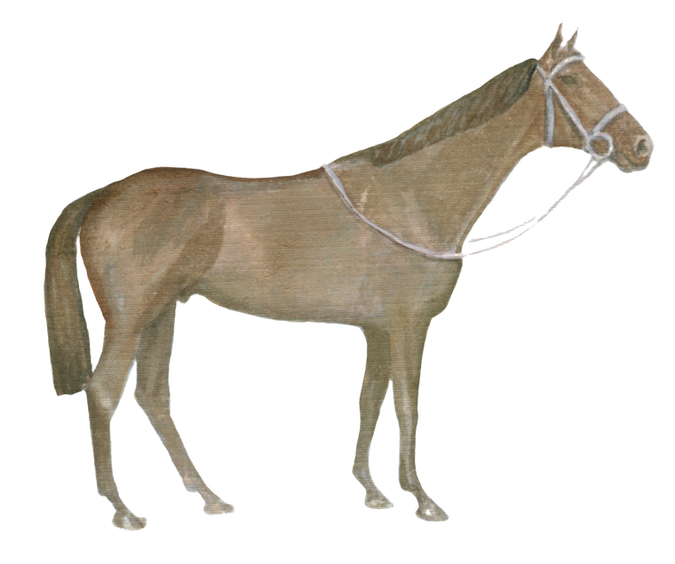 Horse Equestrian downloadable artwork