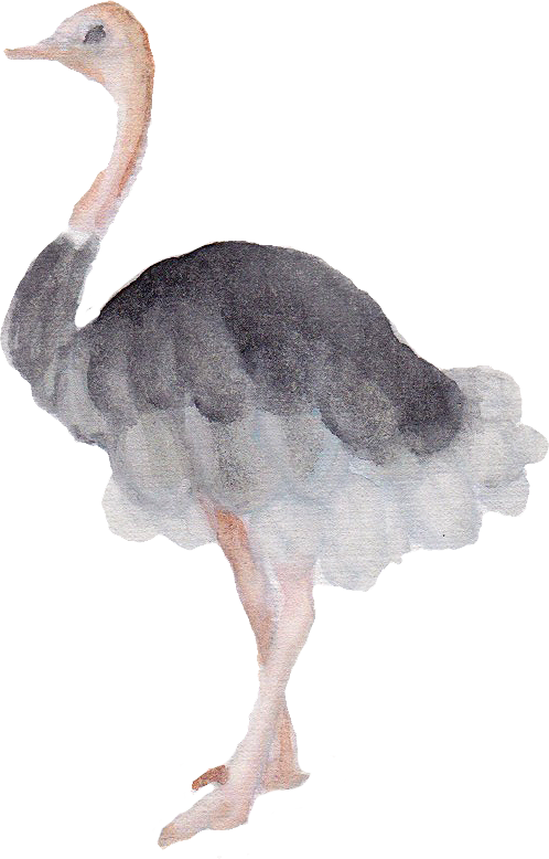 Ostrich downloadable artwork