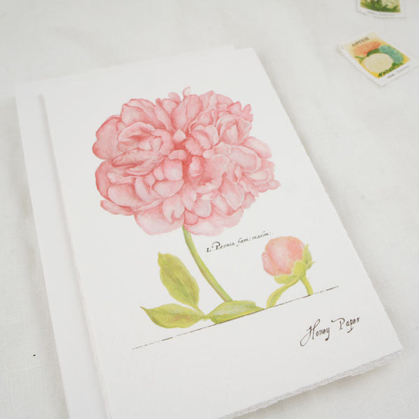 Pink peony botanical art print by Michelle Castle