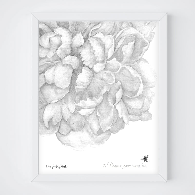 Detailed Black and White Peony Print