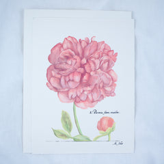 Peony Greeting Cards and Notecard Sets