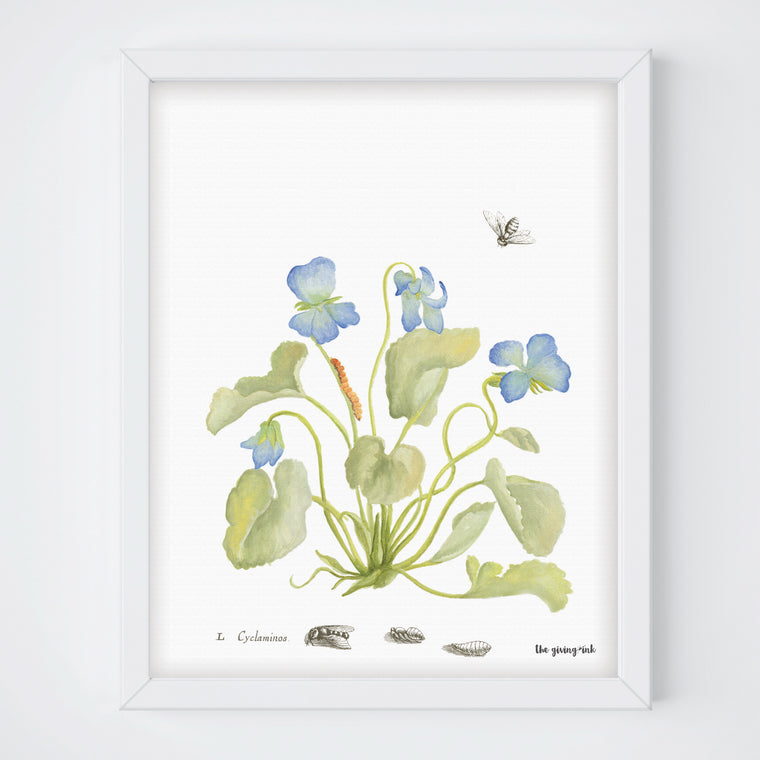 Cyclamen Botanical Print