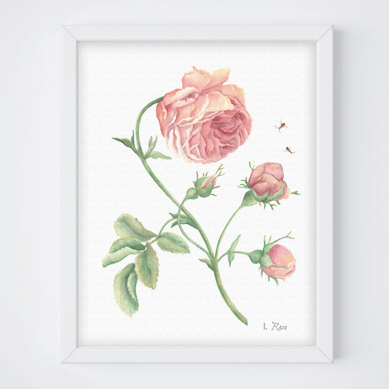 Pink Rose Botanical Print