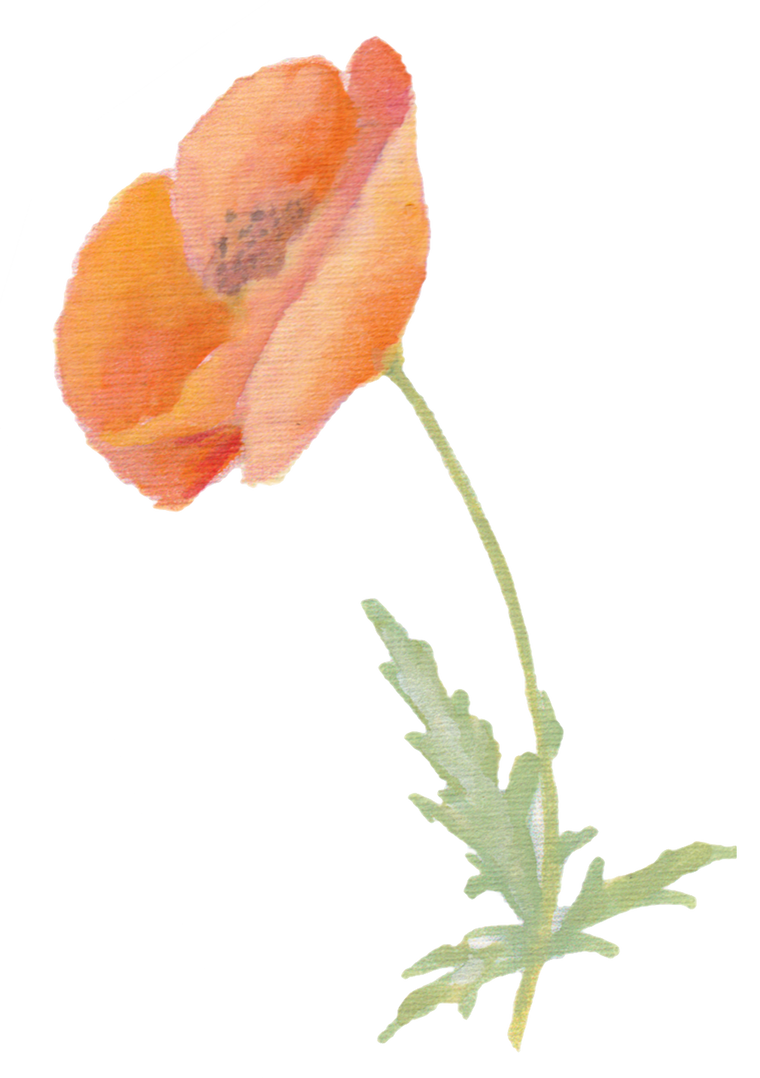 Single Poppy downloadable artwork