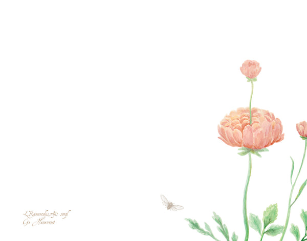 Ranunculus Greeting Cards and Notecard Sets