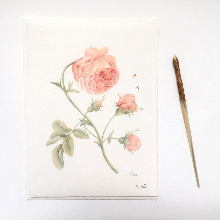 Pink Rose Greeting Cards and Notecard Sets