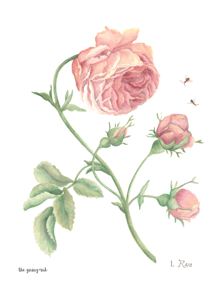 Pink Rose Botanical Downloadable Print