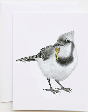 Ray Pembroke Blue Jay Greeting Card