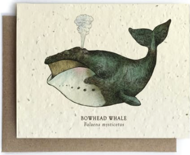 Whale Plantable Seed Paper Greeting Card