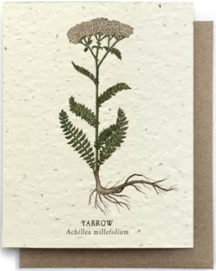 Yarrow Plantable Seed Paper Greeting Card