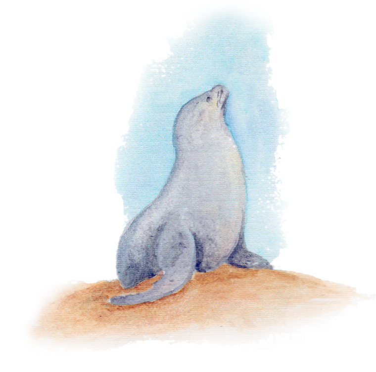 Seal downloadable artwork