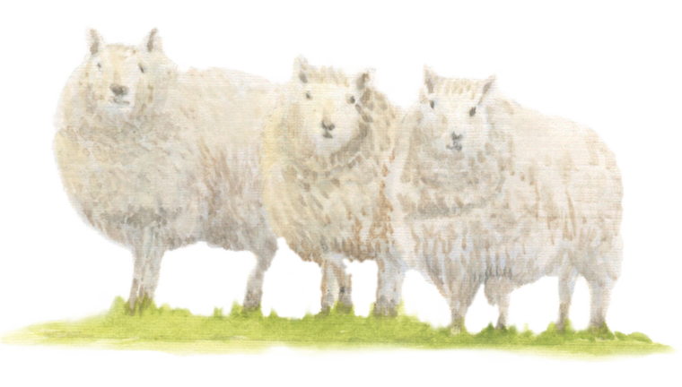 Sheep downloadable artwork