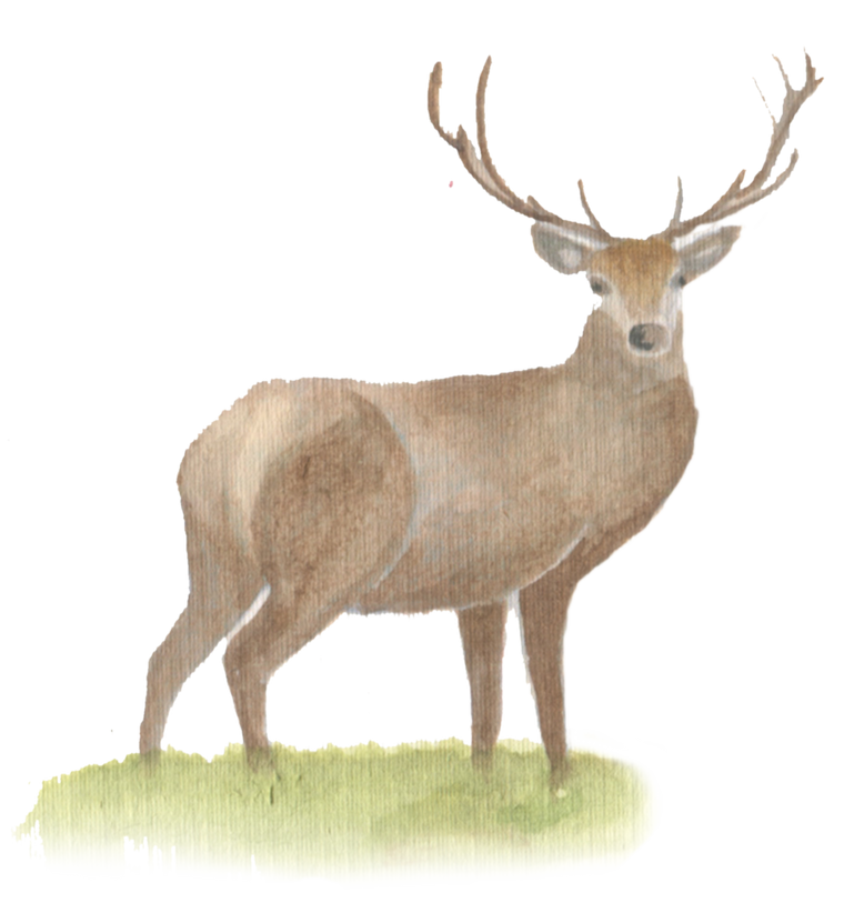 Stag downloadable artwork