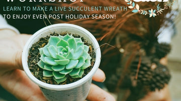 New Dates announced for Succulent Wreath Workshops!