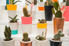 hi cacti brings desert plants and southwestern decor to Black Deer Festival