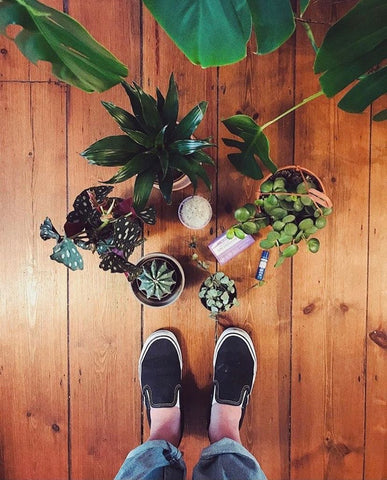 Hi Cacti growing houseplants and happiness book girls with plants indoor plants plant lover gift
