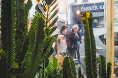 Hi Mama Cactus & Margaritas Pop up at Hi Cacti Brighton