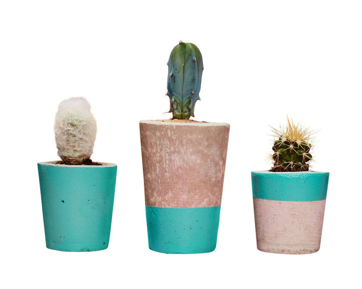 Concrete Cactus Planters Set of three: Turquoise