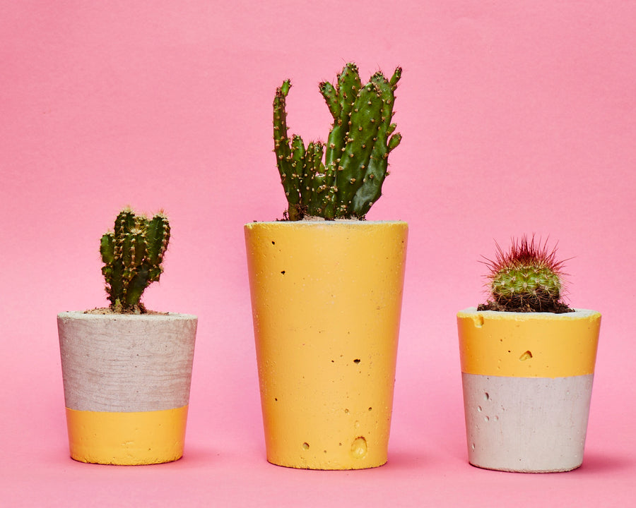Concrete cactus planter yellow set of three