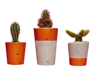Concrete Cactus Planters: Set of three- Orange