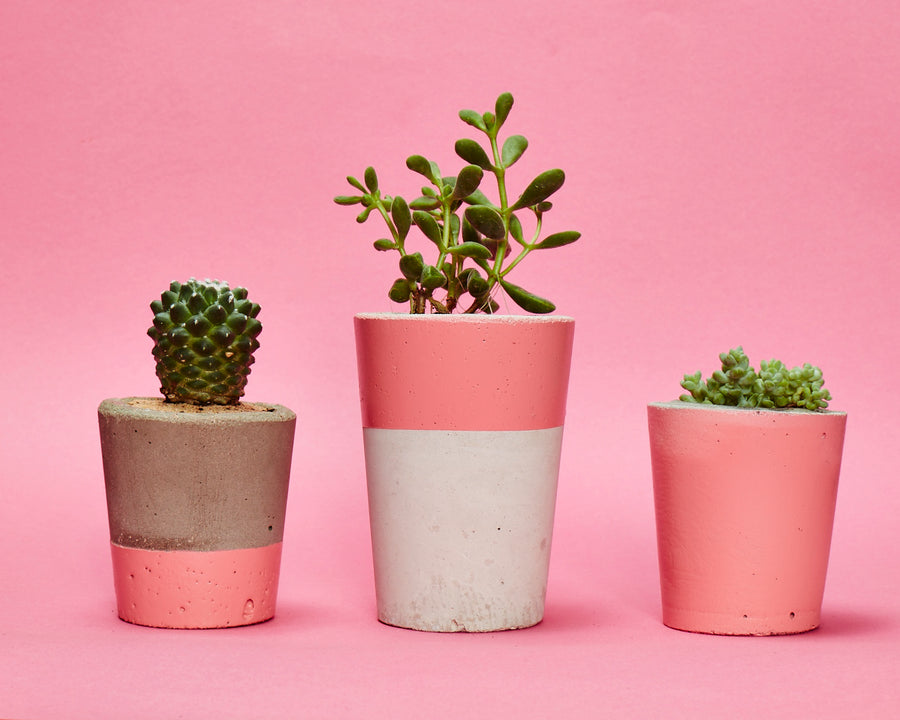Concrete Cactus Pots: Set of three- Pink