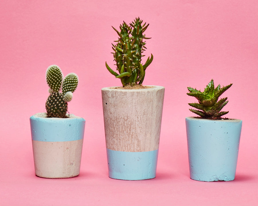 Concrete Cactus Pots: Set of three- Baby Blue