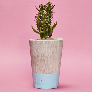 Concrete Cactus Pot painted baby blue in a Tall Size including a Cactus/ Succulent