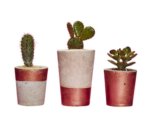 Concrete Cactus Pots: Set of three- Copper
