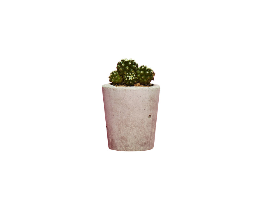 Small Concrete Plant Pot