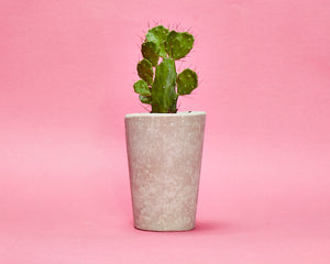Tall Concrete Plant Pot