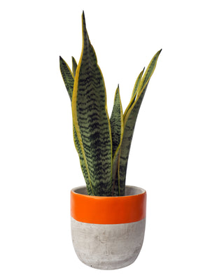 Concrete Plant Pot Medium- Orange