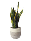 Concrete Painted Planter 13.5cm Hi Cacti