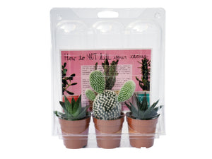 Cactus and/or Succulent Pack of three