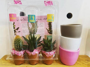 Cactus/ Succulent Pack of Three