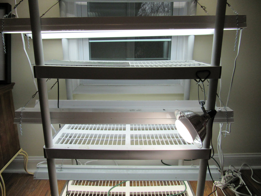 Vegetable Seed Starting Indoors: Purchasing the Right Lighting for Grow-Lights & Saving Money!