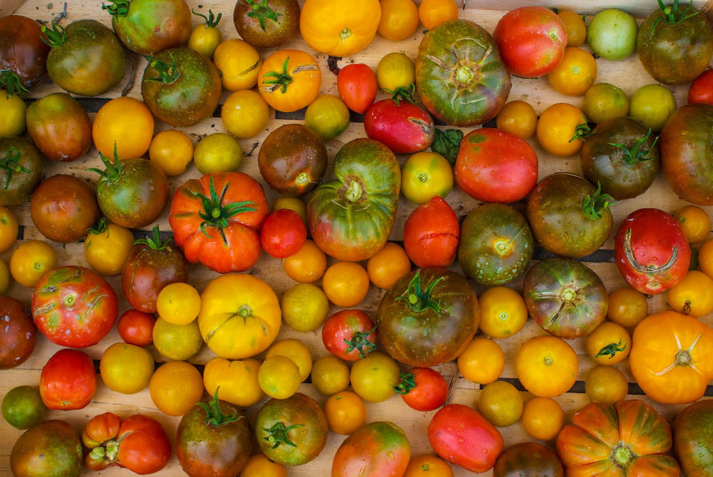 Ten Tips About Tomato Plants