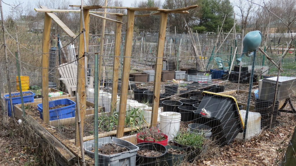 No Room for a Vegetable Garden - Try a Community Garden: Containers, Planting Peas & Broccoli, Basic Tour