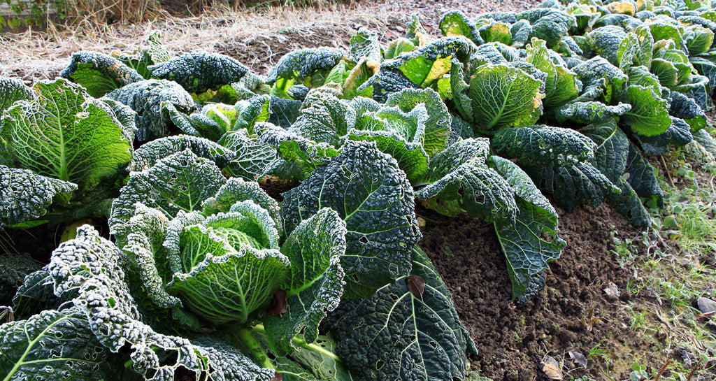 A List of Cool Weather Vegetable Crops