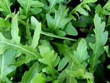 Arugula Seeds Roquette (Heirloom)