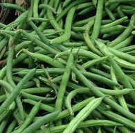 Bean Seeds Kentucky Wonder (Pole) Beans