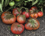 4 Great Brandywine Tomato Varieties Red, Pink, Yellow & Black: Discount Package