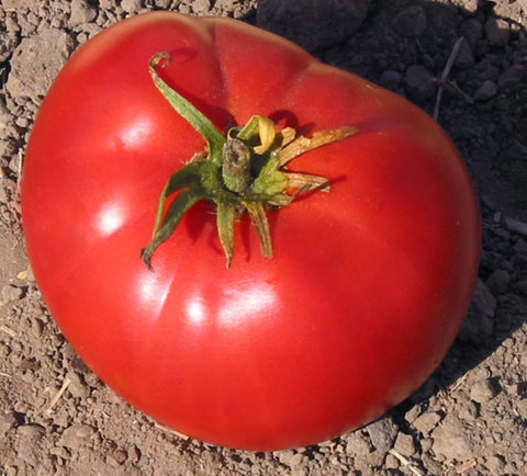 Tomato Seeds Brandywine Red (Heirloom)