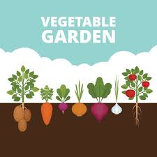 25 Vegetable Seed Packs $29.50 for an all-around garden mix