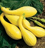 6 Cuke & Zuke Varieties for Warm Weather Production