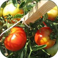 Tomato Seeds Homestead (Heirloom)