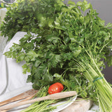 Herb Seeds Italian Parsley