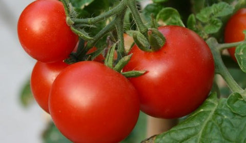Tomato Seeds Marglobe (Heirloom)