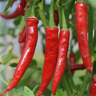 Pepper Seeds Cayenne Red Thick