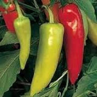 Pepper Seeds Hungarian Sweet Wax (Heirloom)
